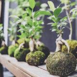 盆栽を趣味に!松柏・雑木・花物・実物・草物│初心者におすすめの盆栽は?