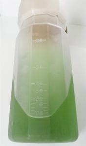 水筒メモリアップ