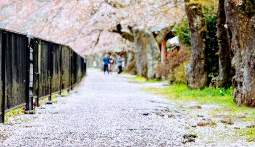温泉旅館の駐車場に宿泊するって発想がユニーク(神奈川県箱根町の温泉)